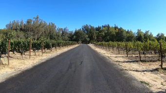 Take a Virtual Tour of Wine Country in the Fall