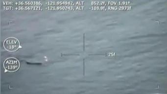 Shark Attacks Fisherman at Pebble Beach