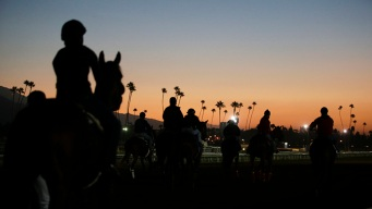 Another Horse Dies at Santa Anita Park, the 22nd Death Since December