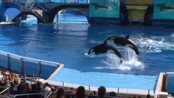 TripAdvisor Cutting Ties With SeaWorld and Other Animal Attractions