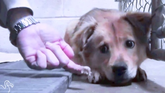 Terrified Pups Learn to Trust