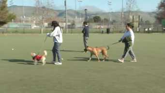 Fremont Dog Park Shuts Down After Pets Develop Infection