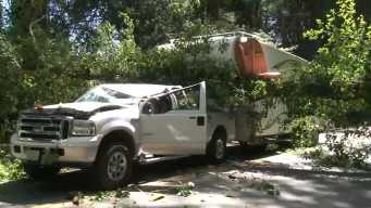Tree Topples Over on Truck, Trailer in the North Bay