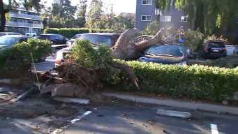 Strong Wind Concerns in the Bay Area