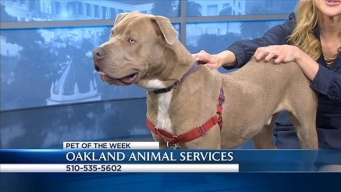 Bay Area Proud Pets: Maddox