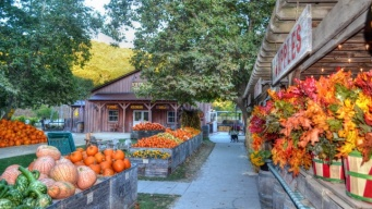 Avila Valley Barn: Autumn Outing in SLO