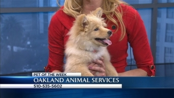Bay Area Proud Pets: China