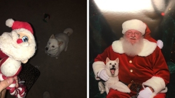 Dog Meeting Santa Will Revive Your Christmas Spirit