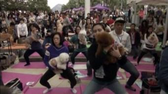 Hundreds Gather to Break 'Dog Yoga' World Record