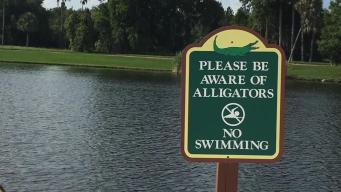 Disney Reacts Properly to Fatal Alligator Attack: Crisis Expert