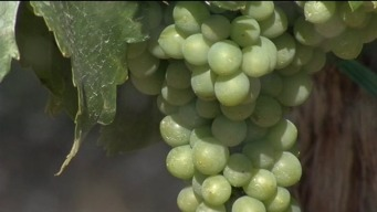 Climate Change Could Hurt Winemaking, Wildlife