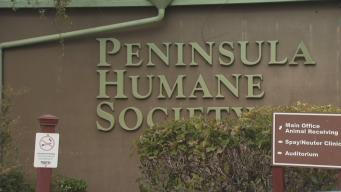 Workers Accuse Humane Society of Understaffing, Animal Abuse