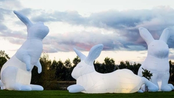 Super-Sized, Illuminated Bunnies to Grace San Francisco Civic Center Plaza