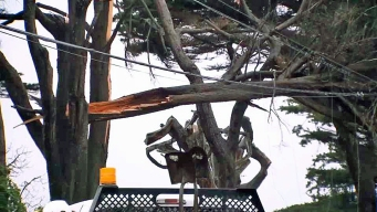 Coastal Winds Topple Trees, Down Power Lines in Pacifica