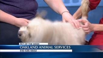 Bay Area Proud Pets: Jackson
