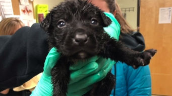 9 Pups Found in Sealed Dog Food Bag in Kit Carson Park