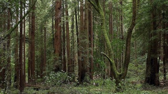 Romance in the Redwoods: Trees to Slugs