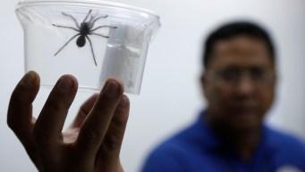 Creepy Cargo: Philippines Seizes 757 Tarantulas From Poland