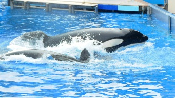 SeaWorld, Former Execs Must Pay $5 Million to Settle Claim