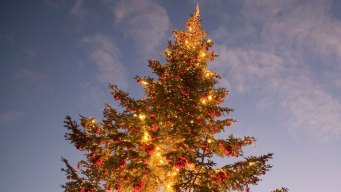 Prolonged Drought Not Good For Christmas Trees