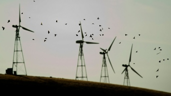 Killer Windmills: Wind Energy Leaves Trail of Dead Eagles