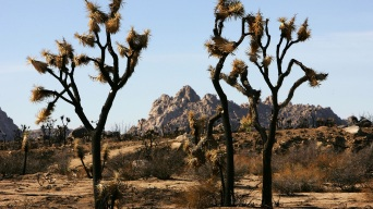 Human Remains Found in Joshua Tree
