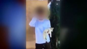 Video Shows Young Man Throwing Cat Into Street