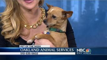 Bay Area Proud Pets: Mango