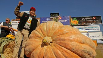 Napa Man Wins Weigh-Off With 2,175-Pound Pumpkin