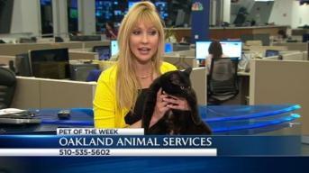 Bay Area Proud Pets: Celia