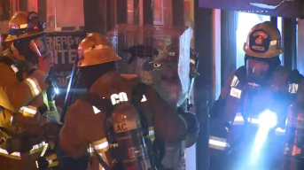 About 250 Animals Rescued From Pet Shop Fire