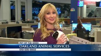 Bay Area Proud Pets: Daisy