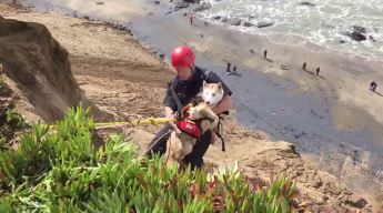 Dog Rescued After Plunging Off Fort Funston Cliff