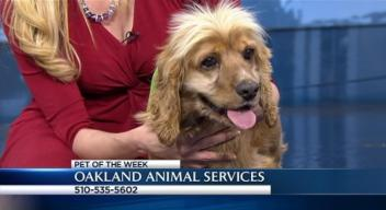 Bay Area Proud Pets: Matisse
