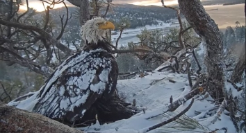 The Forest Service is Ending Its Annual Bald Eagle Count, and It's Actually Good News