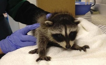 Walnut Creek Wildlife Hospital: Peek Behind the Scenes