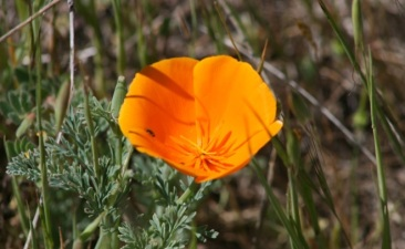 Diablo Delights: Wildflower Hikes