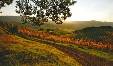 Hands-On Harvest: Sonoma Valley CRUSH