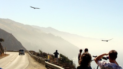 Big Sur Condor Tours