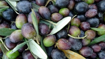 Olive You, Paso Robles Olive Festival