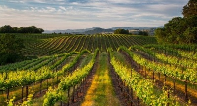 A Concierge for Northern Sonoma Wine Country