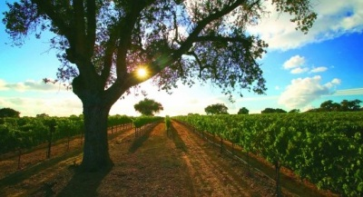 Following the Foxen Canyon Wine Trail