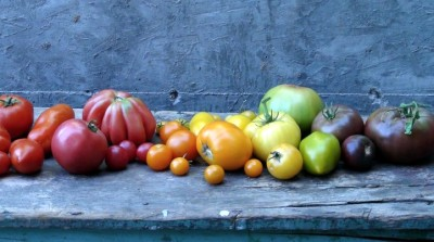 Tomatomania! Is a Juicy Sign of Spring