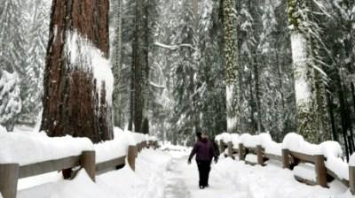 Wuksachi in Winter