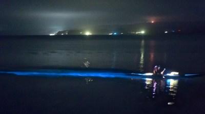 Bioluminescence on Tomales Bay