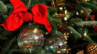 Nature Noël: Holiday Tree Walk at Roaring Camp Railroads