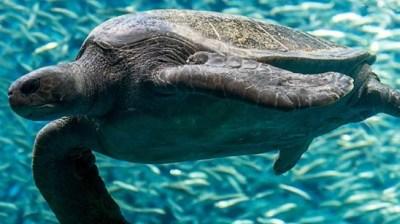 Happy World Sea Turtle Day