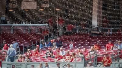 Bee Swarm Delays Start of Giants-Reds Game in Cincinnati