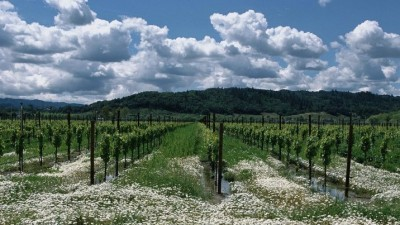A Grape Weekend in Alexander Valley