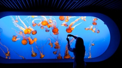 Monterey Bay Aquarium: Free Admission for Veterans